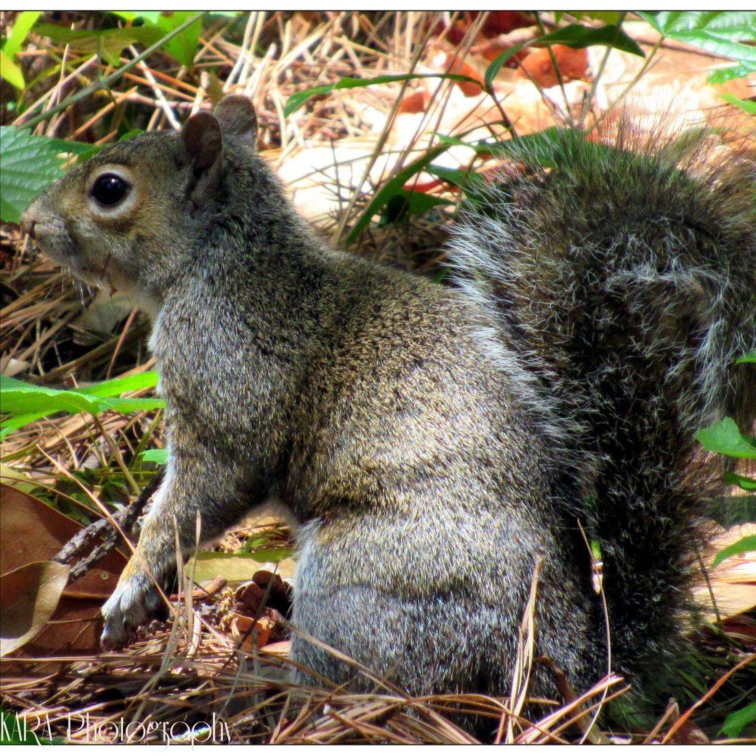 Squirrel, Animal, Park