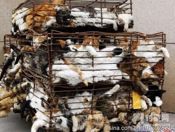viele katzen im transportkäfig übereinander.lebend.
