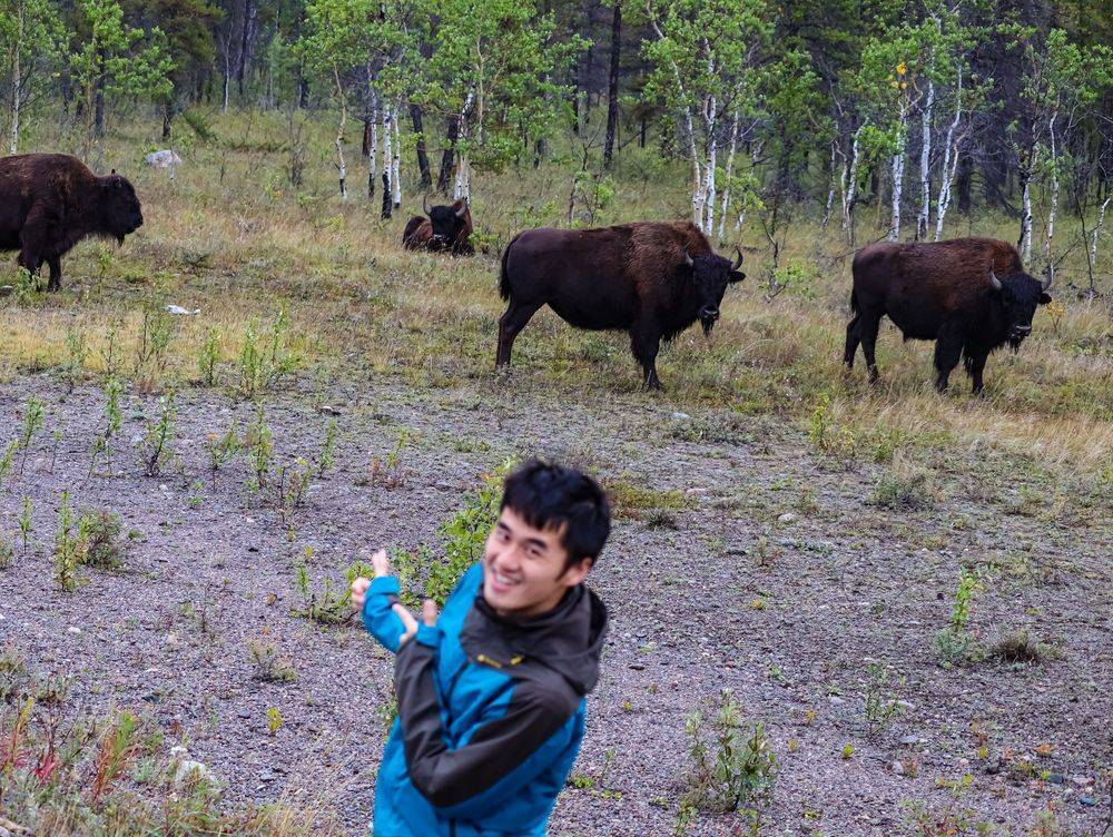 Yellowknife Buffalo Tour