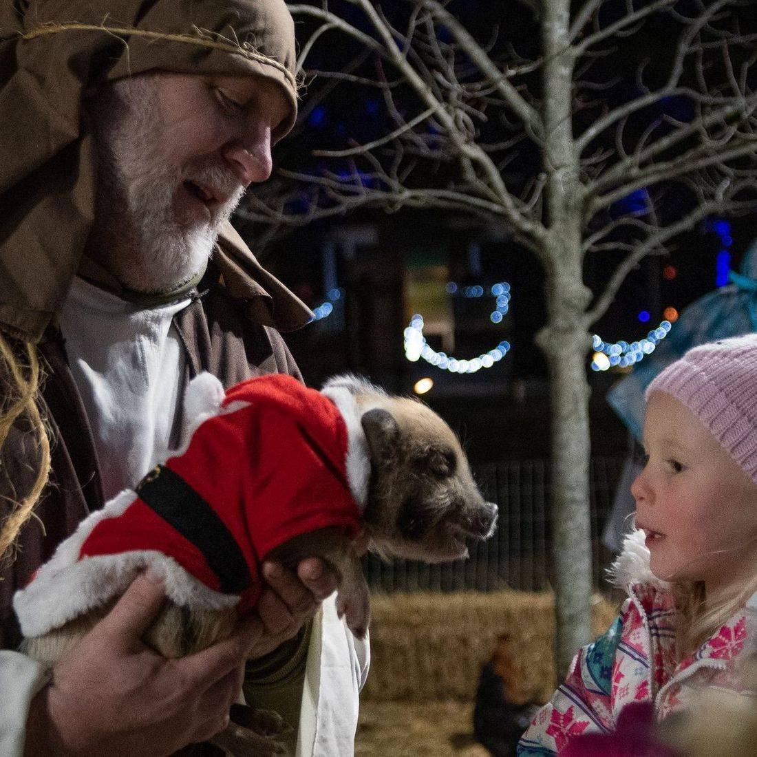 Man dressed in shepherds costume in nativity holding a pig