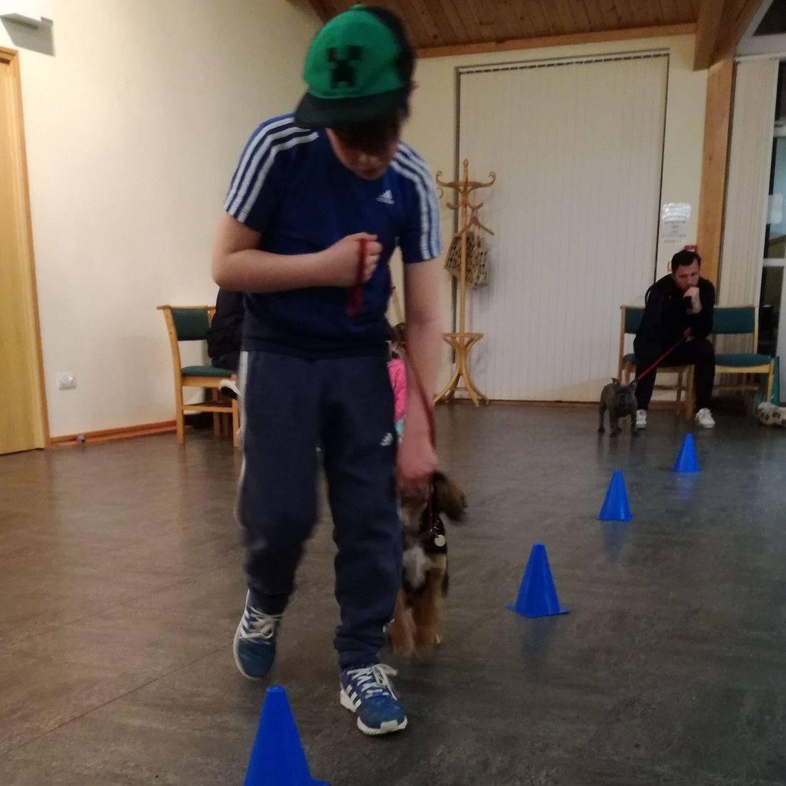 Horsham Puppy and Dog Training