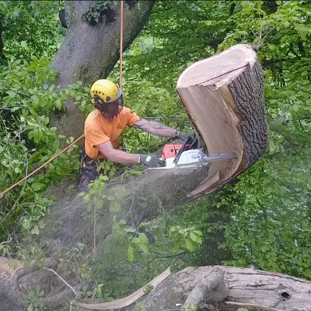Tree surgery Cornwall