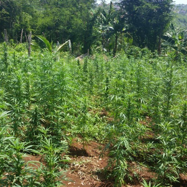 Weed Farm Tour