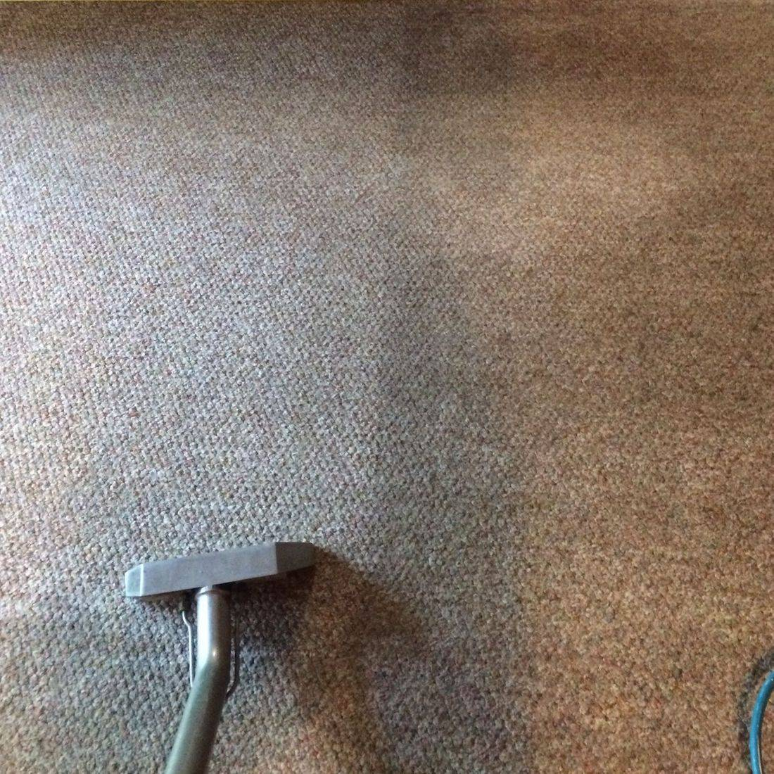 Action Steam Cleaning Carpet Cleaning
