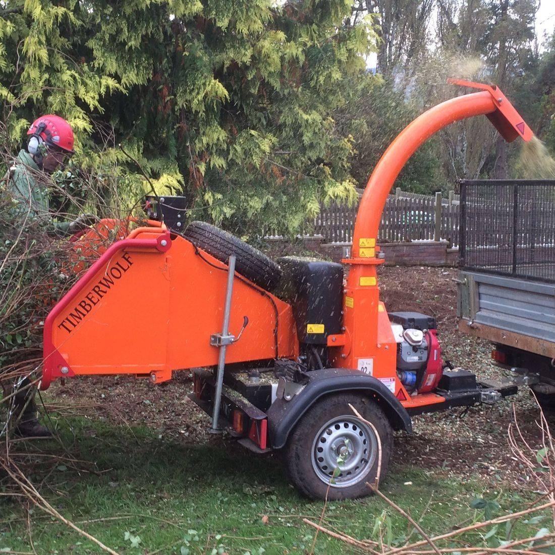 Tree Work North Devon