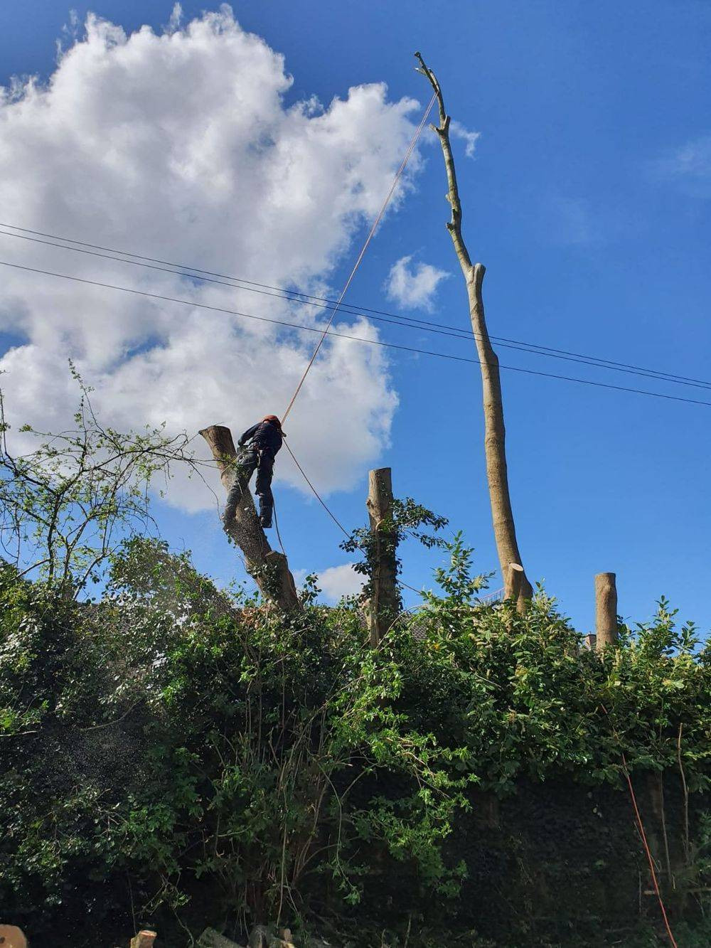 A1 Arborist Tree Surgeon sectional dismantling trees