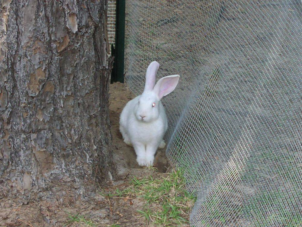 Bunny Rabbit, our first rabbit