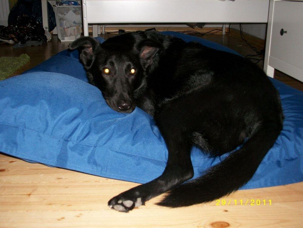 Unser -Blacky-, aus einer Zwingerhaltung freigekauft im Februar 2010. Lebt glücklich bei uns zu Hause.