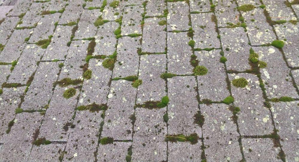 Moss on roof maintenance