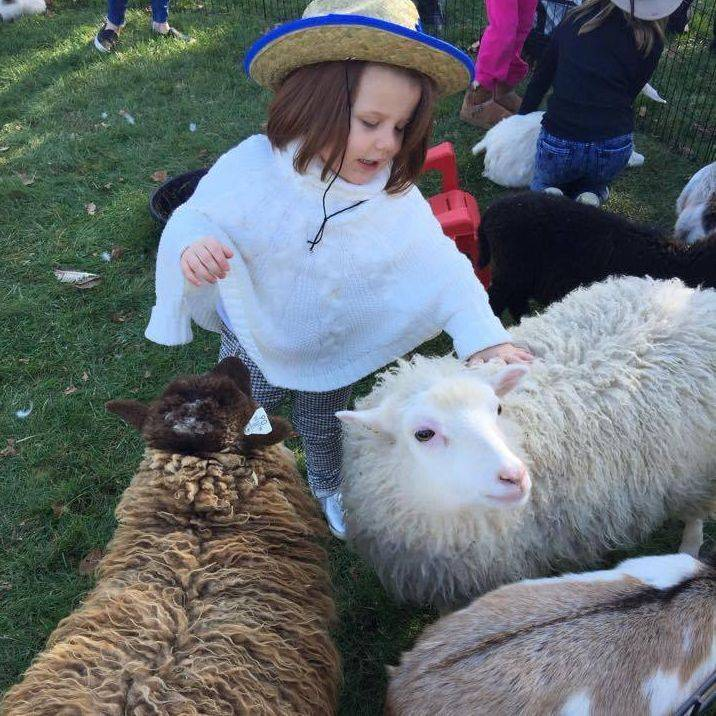Little girl and sheep