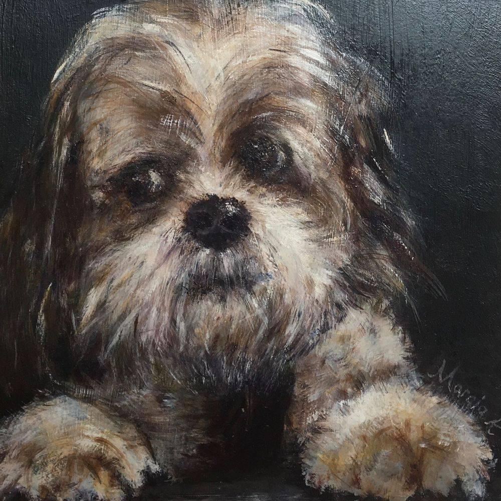 shih tzu doggie oil painting by Marcia Kuperberg