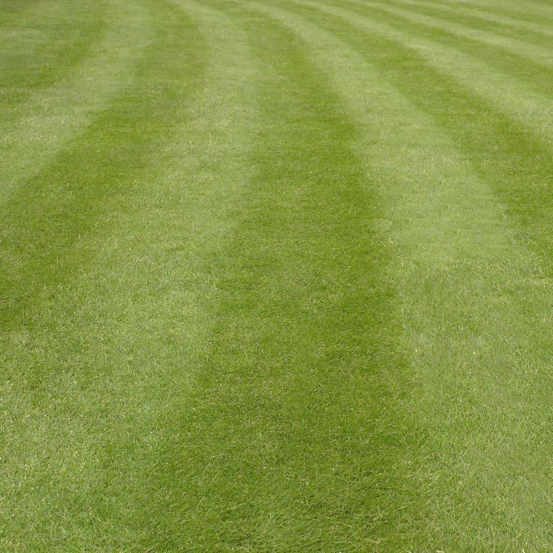 herzberg lawn care