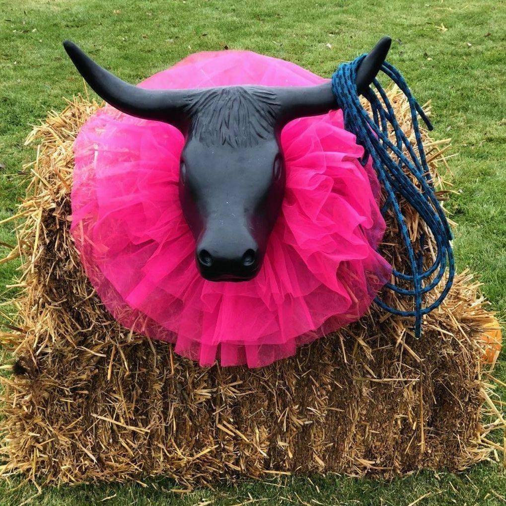 Cowgirl steer roping