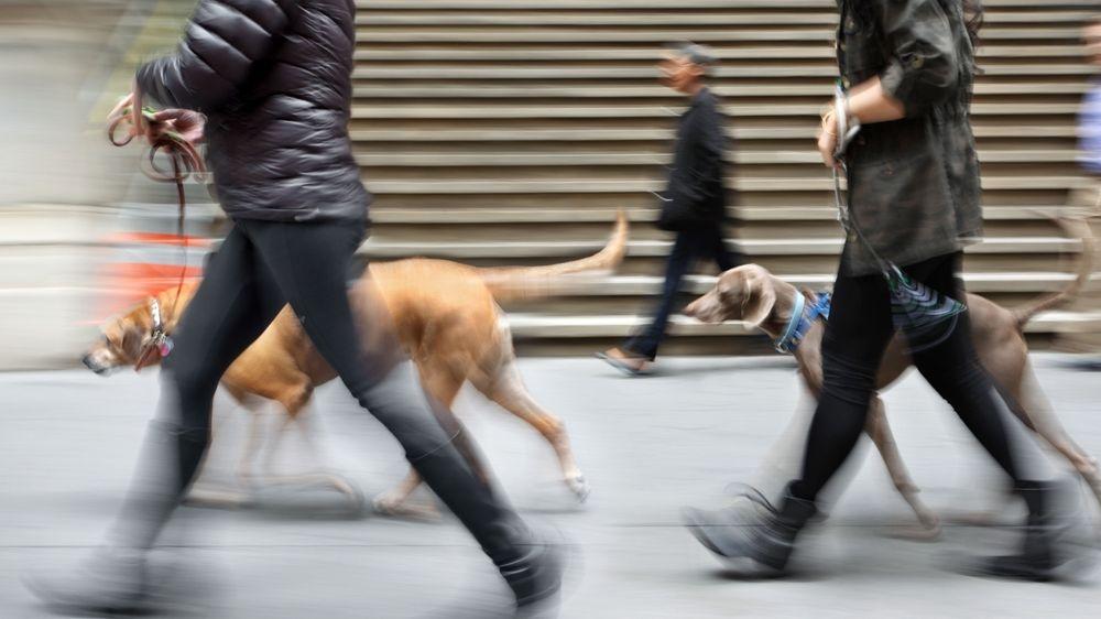 hondenuitlaatdienst wandelen met de hond
