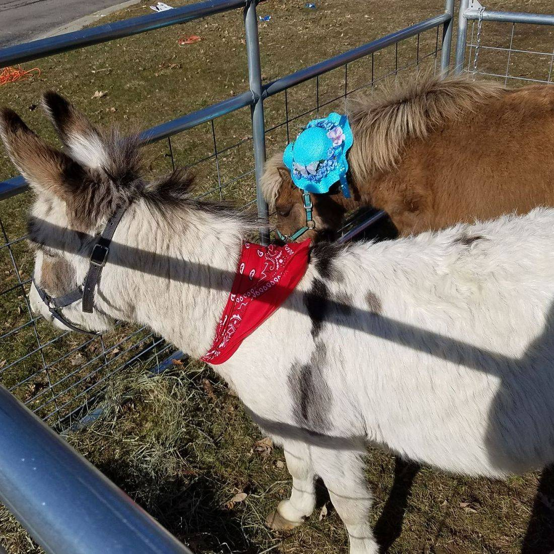 Donkey and mini horse in petting farm