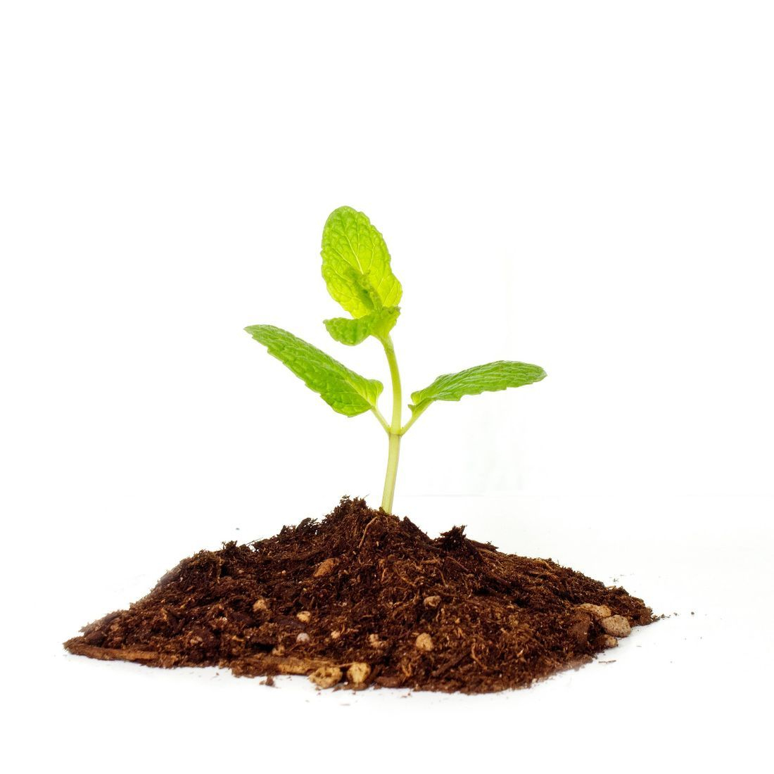Recruitment Business - running a tree planting scheme