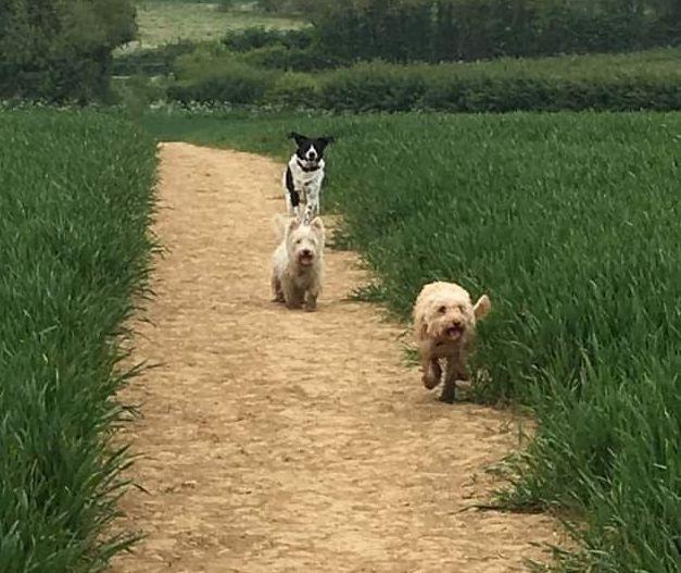 Dog walking in Brackley