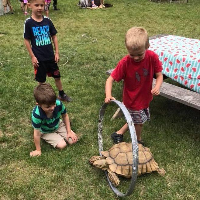 Tortoise fun