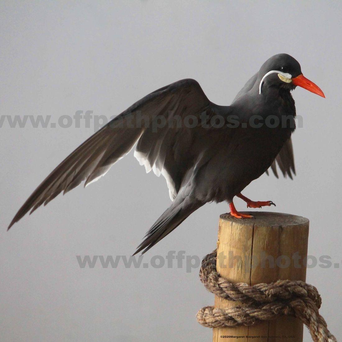 photography, animals, birds, sea, ocean, water. flight, zoo, aviary, beach