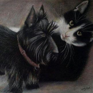 cat, dog, pets, pet portrait