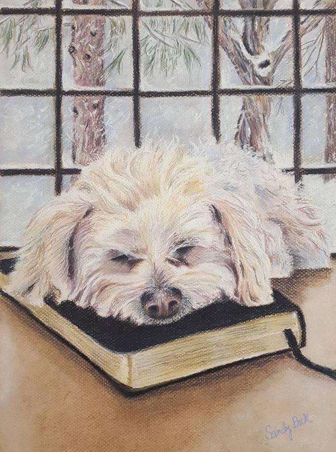 sandy bock, pet portrait, custom portrait illustration, pets, dog, bibe, portrait art