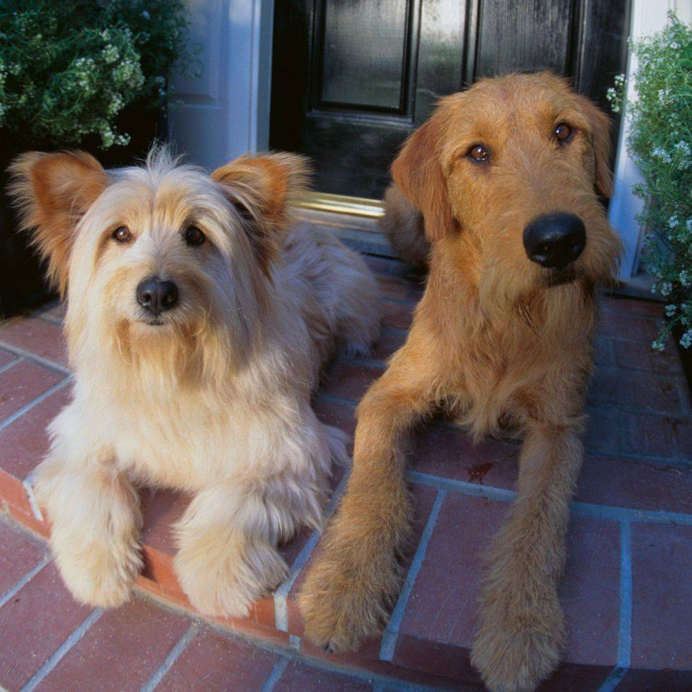 two dogs on front porch