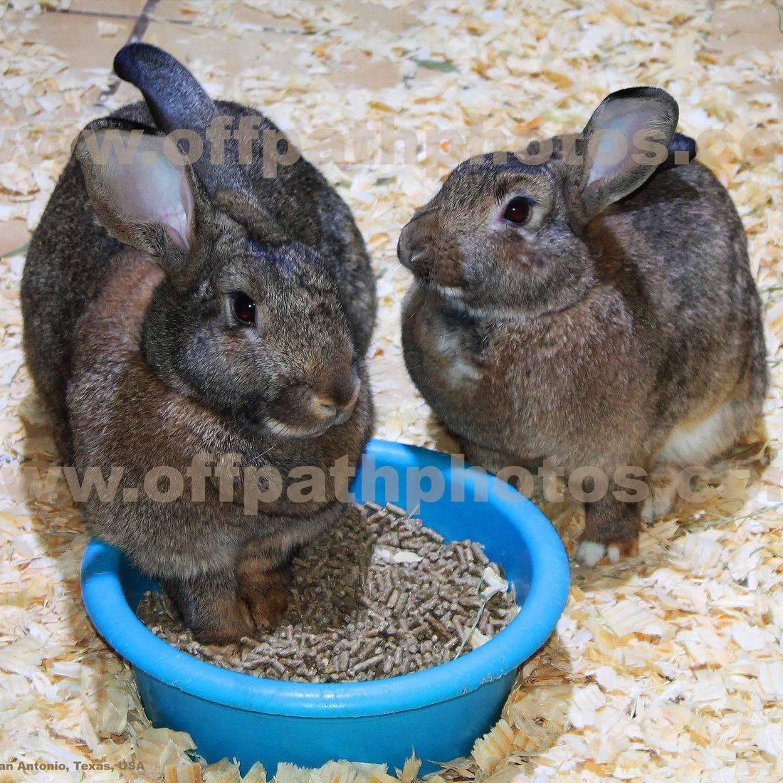 photography, animals, farm, pets, rabbits, feeding, bunny, cute, zoo, cuddly