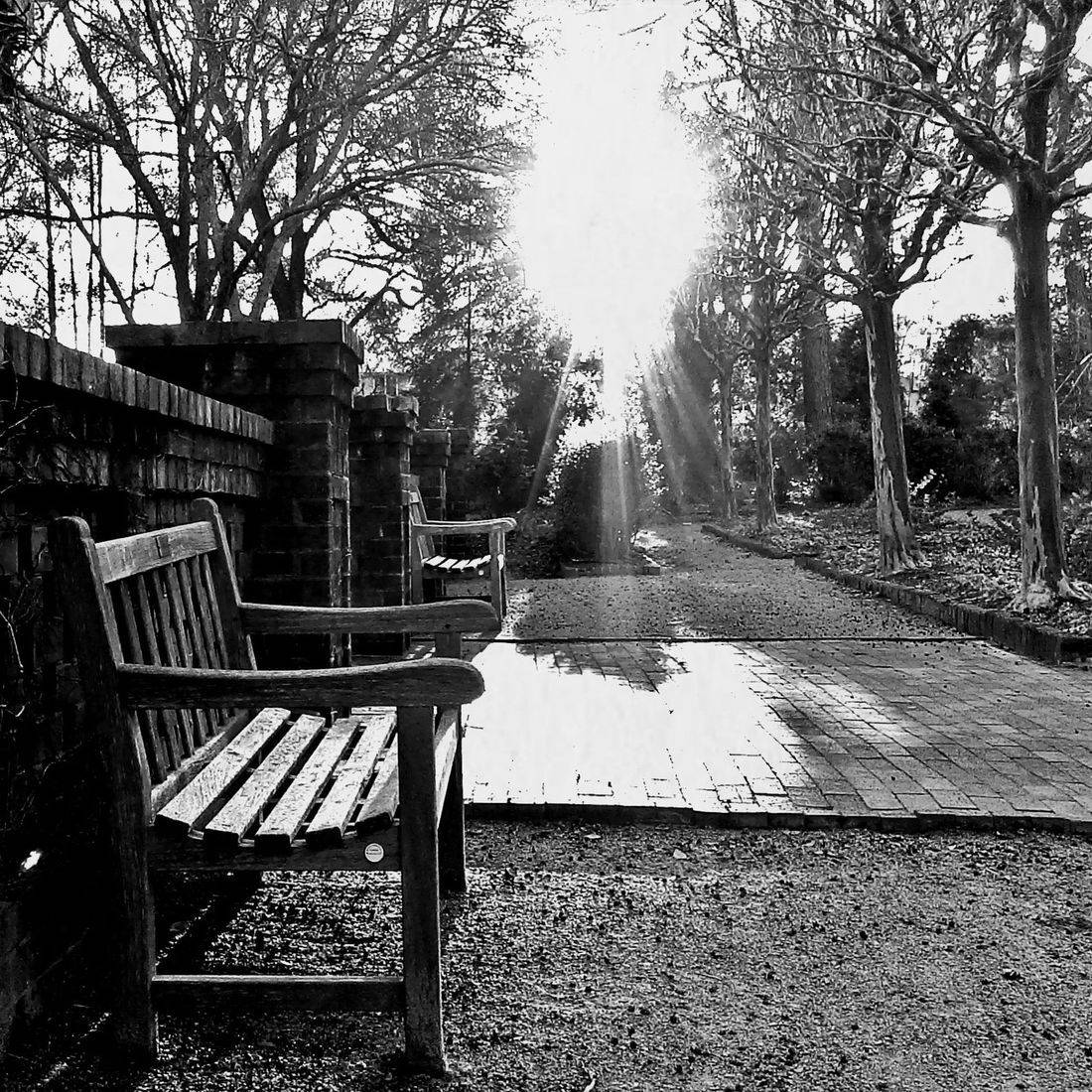 Park, Sunlight, Benches, Garden, Trees