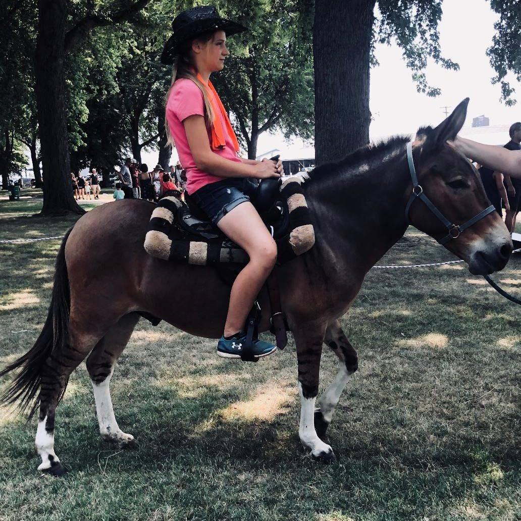 zedonk, chamberlin pony rides