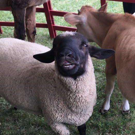 Girl and black lamb