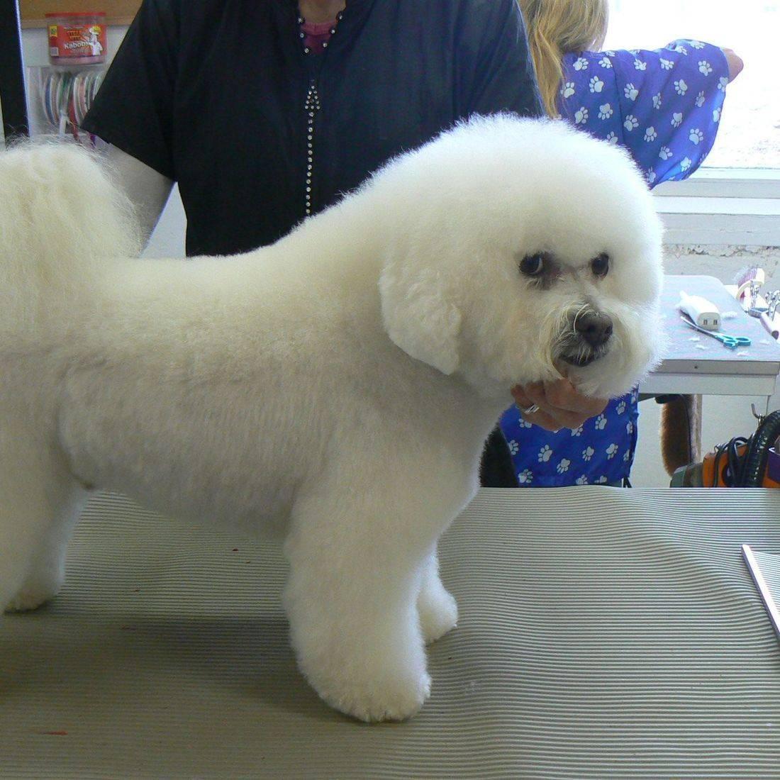dog grooming appleton details Kimberly Wi Details pet groomer appleton