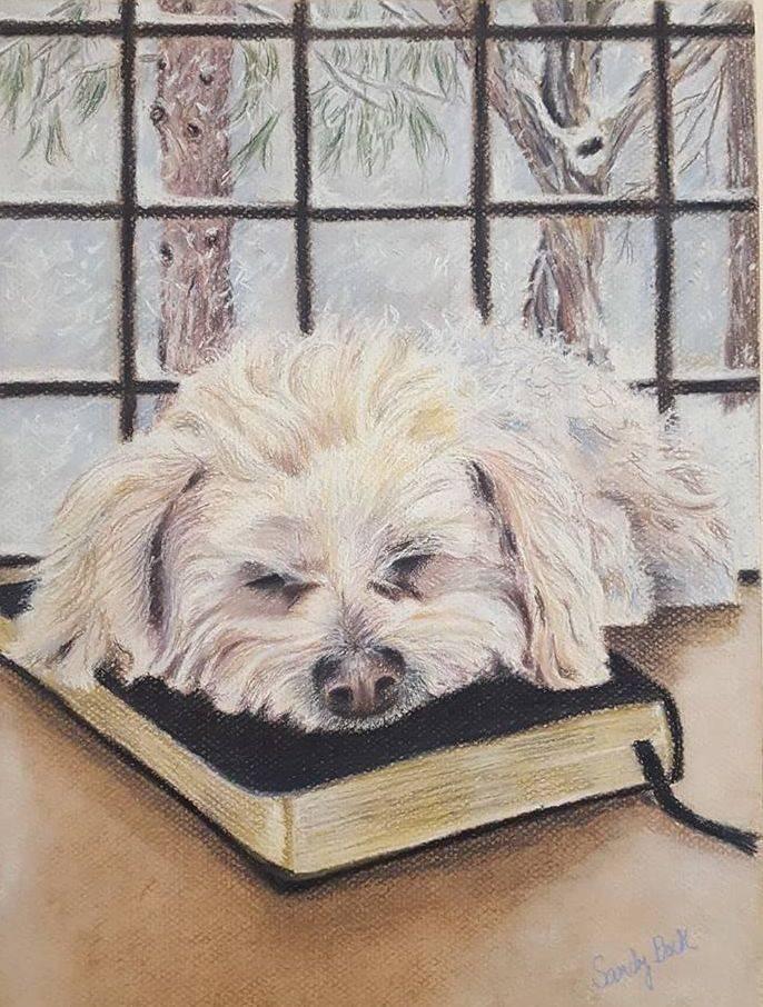 pet portrait, dog portrait, bible