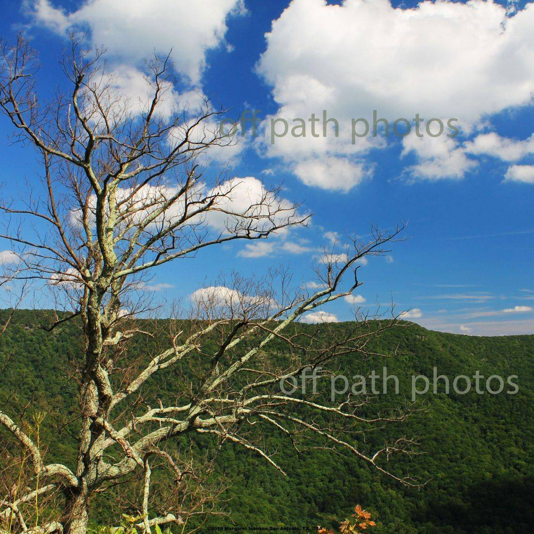 photography, nature, mountains, plants, park, Virginia,  summer, hiking,  sunny, clouds