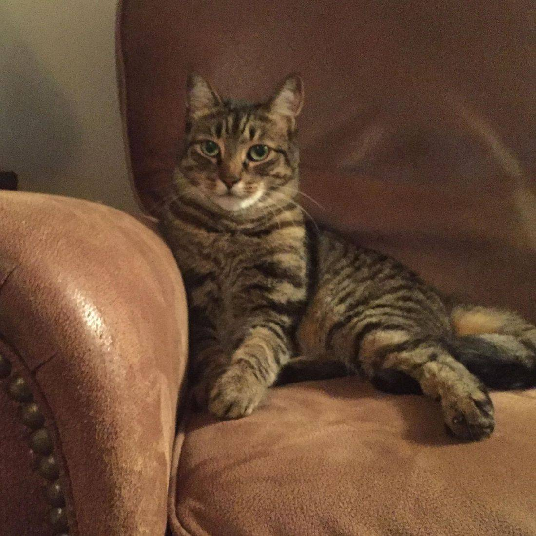 Photo of a handsome cat sitting on a sofa