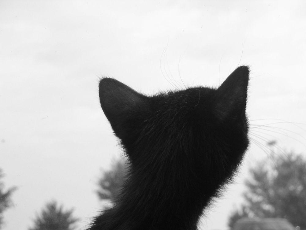 cat sitting, cat sitter zurich, zug, basel, luzern, bern, geneva