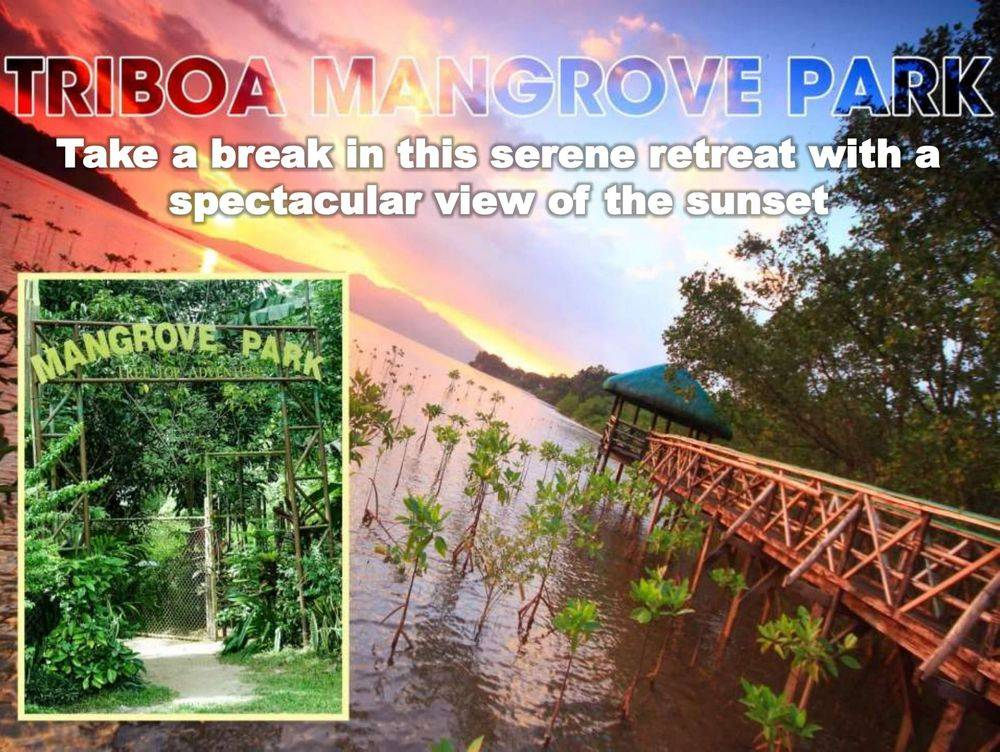 triboa mangrove park, pamulaklakin forest trails , magaul bird park at jest camp , jest camp adventure and bird park , discover the aetas' indigenous culture , british & far east traders & partners, subic bay freeport zone philippines, invest in the philippines, holy land subic sanctuary and theme park, ocean adventure- southeast asia's only open water marine park, treetop adventure: the world's first motorized canopy tour, zoobic safari, funtastic park subic bay, subic bay ecotourism, apaliin forest trails