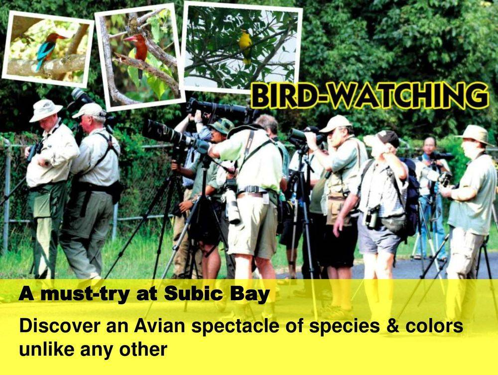 bird-watching: a must-try at subic bay, triboa mangrove park, pamulaklakin forest trails , magaul bird park at jest camp , jest camp adventure and bird park , discover the aetas' indigenous culture , british & far east traders & partners, subic bay freeport zone philippines, invest in the philippines, holy land subic sanctuary and theme park, ocean adventure- southeast asia's only open water marine park, treetop adventure: the world's first motorized canopy tour, zoobic safari, funtastic park subic bay, subic bay ecotourism, apaliin forest trails