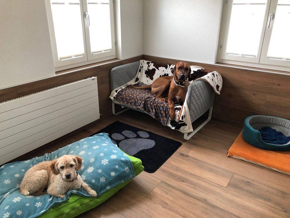 Hundezimmer mit Hunden