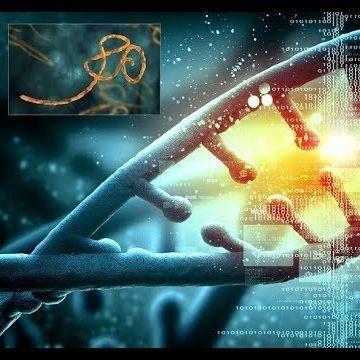 Les Origines De L'homme L'évolution De Nos Gènes