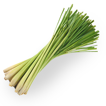 Lemongrass, Essential oils, Fort Saskatchewan