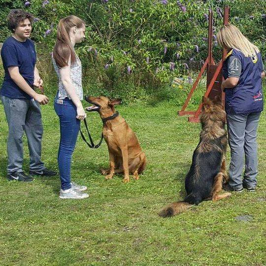 behaviour problems Liverpool, dog training selling, dog training Liverpool