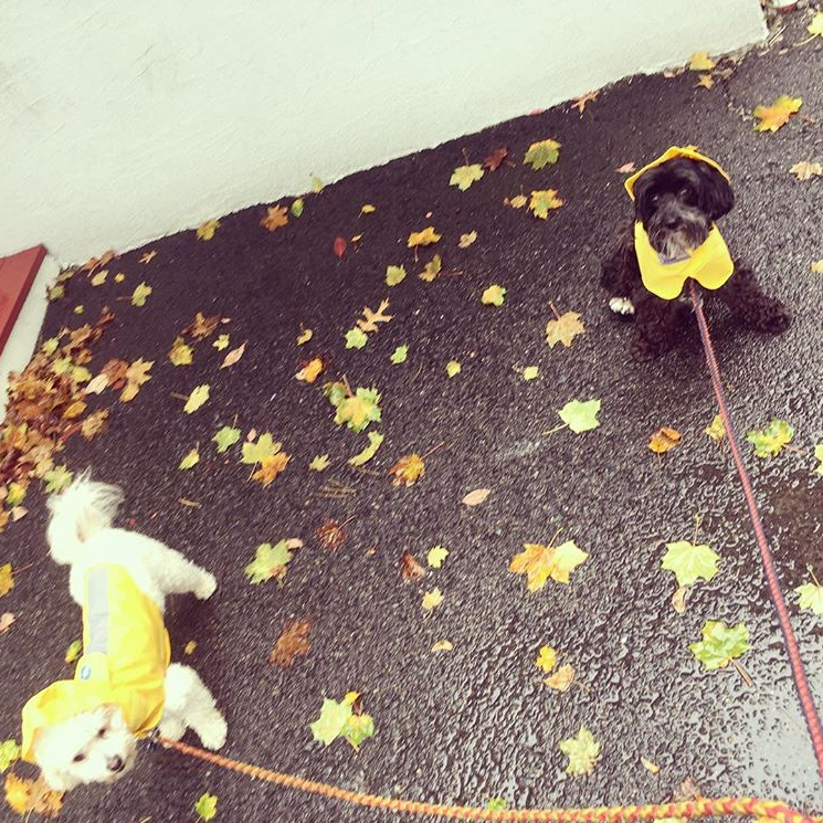 Photo of two dogs in raincoats outside