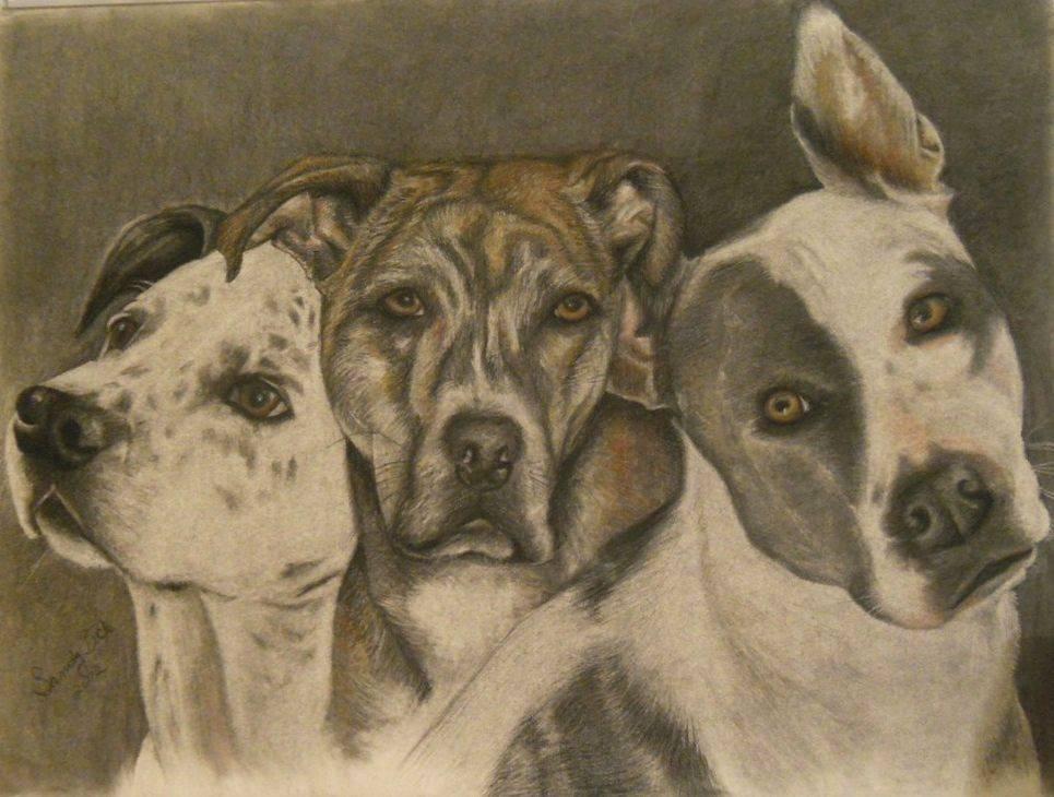 dogs, pit bulls, portrait, dog portrait, pet, pet portrait, art, sandy bock
