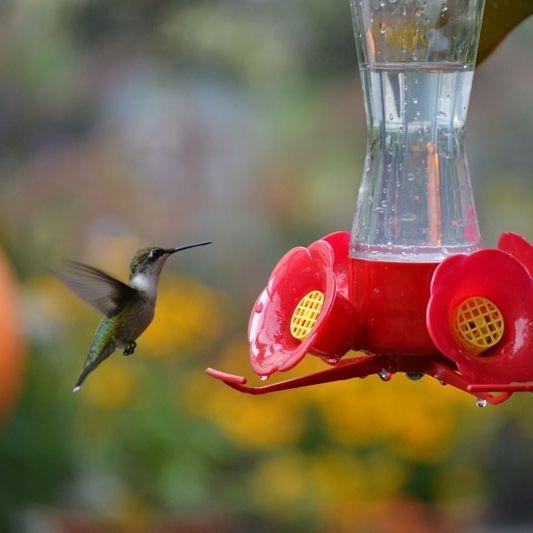 Hummingbird feeders at the Wildflower Garden and Fairy Retreat.