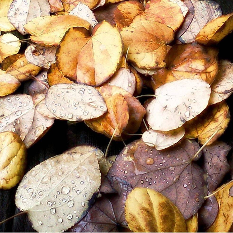 Leaf, Autumn, November, Nature, Leaves