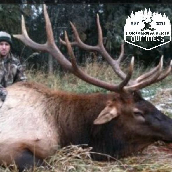 ELK HUNTING BUCKS  ALBERTA OUTFITTING