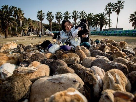 Rabbit Island, Non-feral rabbits, wimb, war is my business