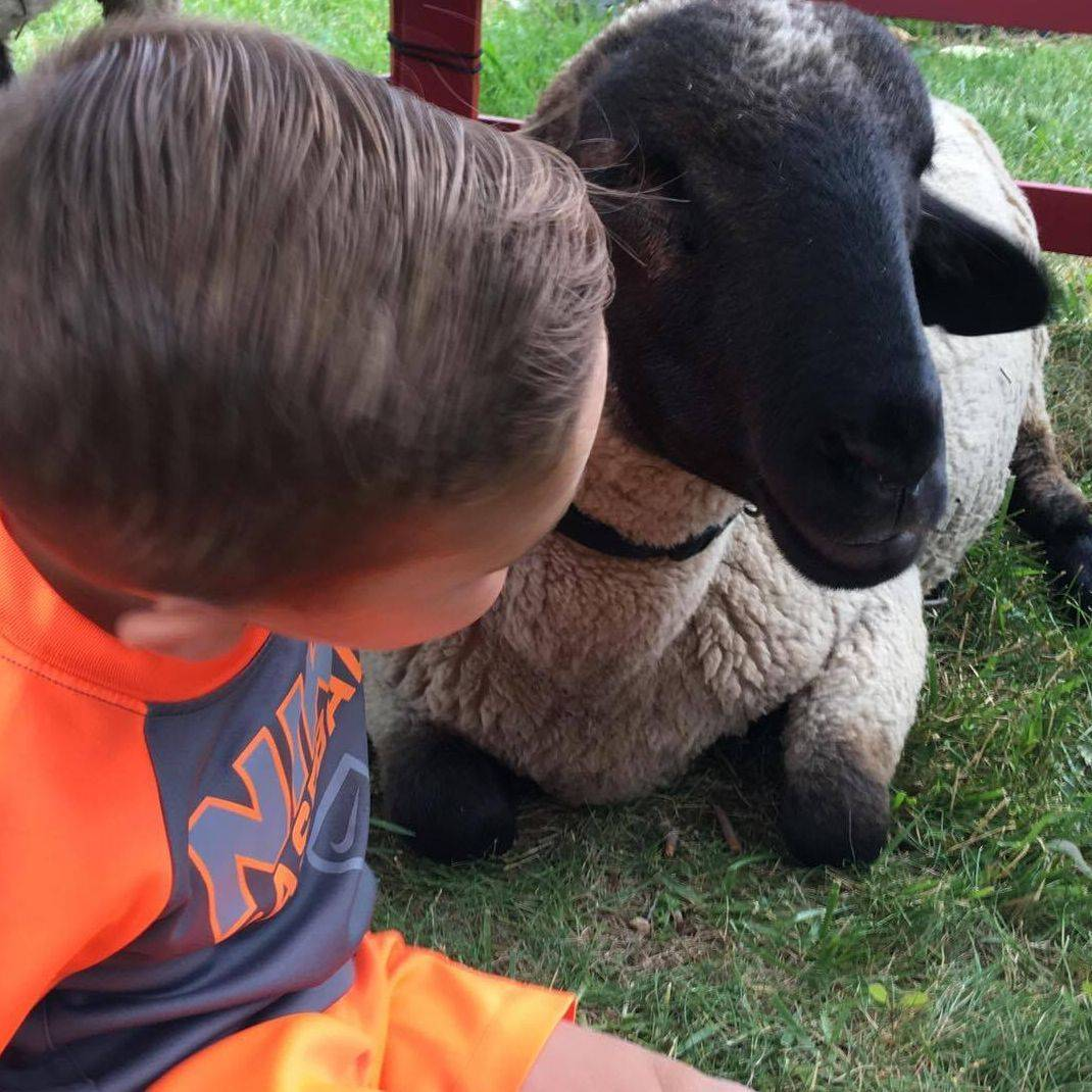 little boy and sheep