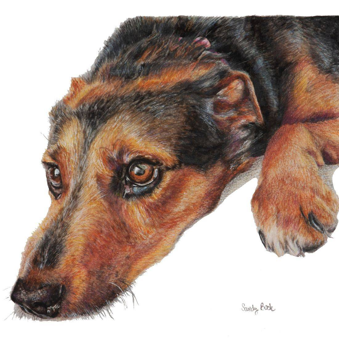 dog portrait, portrait, pet portrait, pet art