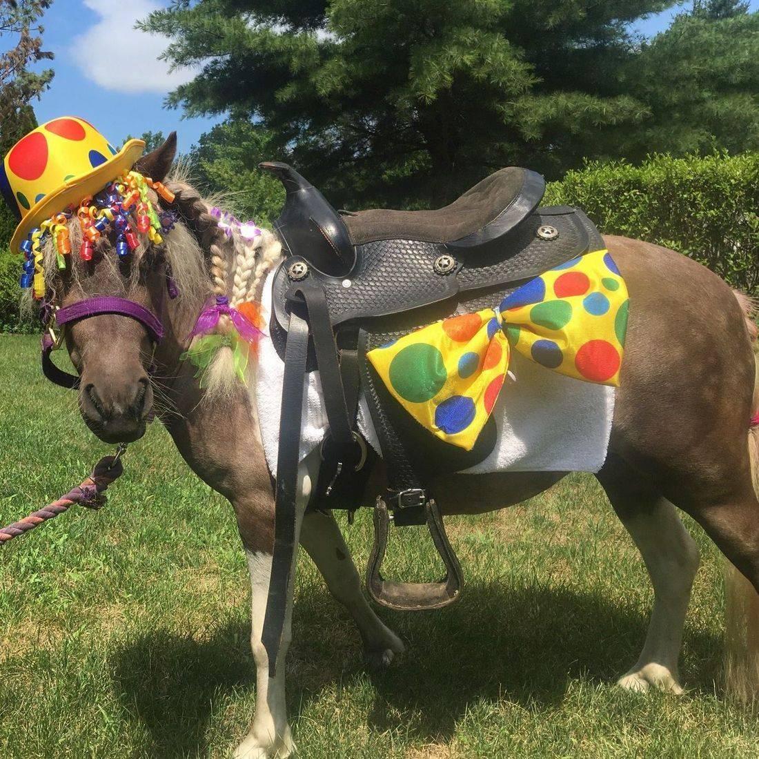 Clown pony